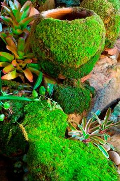 DIY Moss for the Garden- Blend up 1 Part Moss, 1 Part Sugar, 2 Parts Beer... pour or brush over pots, stone or pavers and moss will grow!