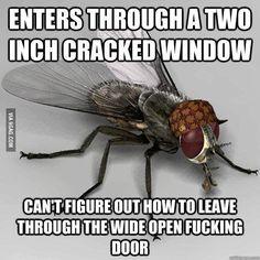 Scumbag Housefly