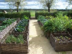 """herbs grown magnificently in handmade willow baskets"" 