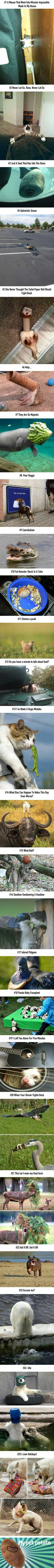 Animals got to love them lol - Imgur