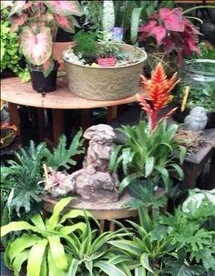 Summer in the Greenhouse Garden, Plants, Summer, Garten, Summer Time, Lawn And Garden, Gardens, Plant, Gardening