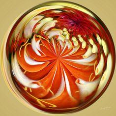 Amazing Circle - Zinnia.  Copyright Nancy Kirkpatrick Photography