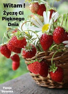 Fruit And Veg, Fruits And Vegetables, Fresh Fruit, Beautiful Fruits, Beautiful Gardens, Beautiful Flowers, Strawberry Patch, Strawberry Farm, Strawberry Picking