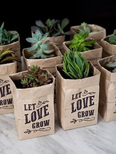 "These DIY ""Let Love Grow"" Succulent Wedding Favors Are The Cutest! These printable Let Love Grow succulent wedding favors are the cutest!These printable Let Love Grow succulent wedding favors are the cutest! Wedding Favors And Gifts, Succulent Wedding Favors, Creative Wedding Favors, Inexpensive Wedding Favors, Elegant Wedding Favors, Cheap Favors, Wedding Favor Bags, Beach Wedding Favors, Personalized Wedding Favors"