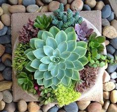 A dish garden is an arrangement of plants placed inside dishware. Unlike plant pots, dishes don't have drainage holes. There are several tips to care your dish garden. Paper Succulents, Succulents In Containers, Cacti And Succulents, Planting Succulents, Planting Flowers, Succulent Gardening, Succulent Terrarium, Garden Plants, Container Gardening