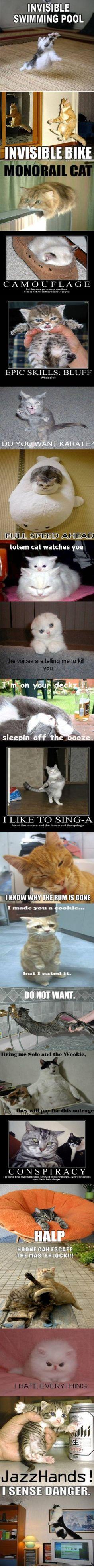 haha i love cat funnies