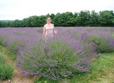 "Lavender ""Phenominal"" new for the south."