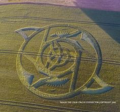 nice LATEST CROP CIRCLE JUNE 24 ( BE AWARE )