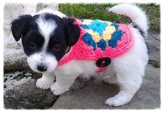 Love your pet week! Crochet pet ideas and cuteness Crochet Dog Clothes, Crochet Dog Sweater, Pet Sweaters, Love Your Pet, Cute Crochet, Crochet Tops, Crochet Ideas, Crochet Projects, Crochet Patterns