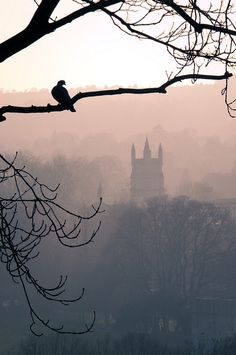 Foggy Day in Winchester by Meleah Rear