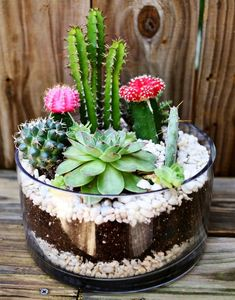 Green Thumb on with These 5 Indoor Garden Projects - These coloured-graft hybrid cacti don't grow naturally in wild. But they do look great in a succulent terrarium like this.These coloured-graft hybrid cacti don't Terrarium Diy, How To Make Terrariums, Decoration Cactus, Decoration Plante, Outdoor Cactus Garden, Succulents Garden, Succulent Ideas, Succulent Plants, Indoor Succulents