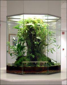 terrarium for a tiny jungle at home.Big terrarium for a tiny jungle at home. Vivarium, Aquarium Terrarium, Planted Aquarium, Terrarium Bowls, Reptile Terrarium, Terrarium Containers, Air Plants, Indoor Plants, Indoor Garden