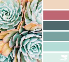 { succulent hues } - https://www.design-seeds.com/in-nature/succulents/succulent-hues-13