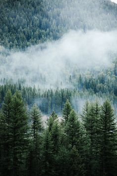 Trendy Ideas for pine tree wallpaper iphone forests Forest Wallpaper Iphone, Nature Wallpaper, Landscape Photography, Nature Photography, Aerial Photography, Pine Trees Forest, Forest Pictures, Foggy Forest, Forest Background