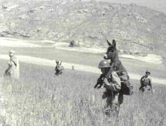 """(HAVE 2 SHARE THIS STORY SIMPLY BEAUTIFUL. a.l.s ) In 1958, a Legionary of """"13"""" (13th Demi-Brigade of Foreign Legion) in operations in the Jebel, Algeria, found this starving donkey. The legionnaire brought him back to the base and the animal became the mascot of the unit under the name """"Bambi"""". The legion was given an award for kindness to animals. Real men are kind to animals!"""