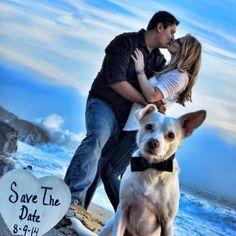 Frank the dog announces a wedding