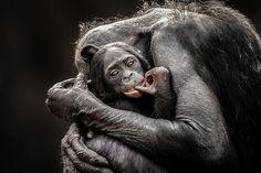 35 fotos de animales national geographic