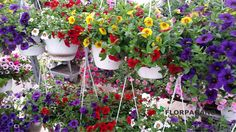 Le novità per i balconi, giardini e terrazzi. #Florpagano #piante #Puglia