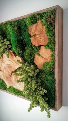 "Preserved Plants: Mood Moss, Sheet Moss, Wood Disks, artificial Donkey Tail Succulents. Frame: Wood with a dark walnut satin-finish. Origin: Hawaii, ""Made in Hawaii""SpecificationsSold By Designs Reimagined, LLC Width 24"" Depth 3"" Height 24"" Weight 17 lb. Materials 100% natural selected preserved moss arrangement, wood frameDesigner Designs Reimagined, LLC"