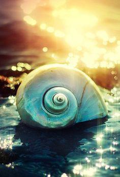 Sundiamonds of Life — http://videla.ru/krasota/fotograf-pedro-terrinha-ch...