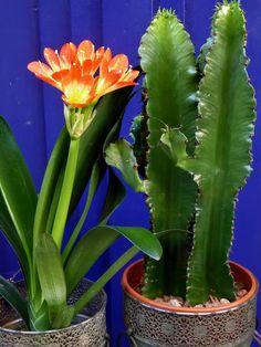 Adoquines y Losetas.: Flores.