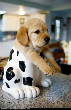 pup in the cookie jar.
