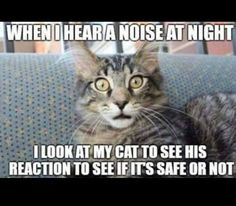 Swear to God, I do the same thing. Only two nights ago I heard a strange noise. One of mine was passed out but the other was sitting bolt upright with ears straight up. Turned out two of my basement strays were mixing it up. A yell down the laundry chute put a stop to it but yeah, my cat made it clear the sound was from OUR house.