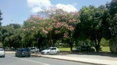 Árvore em frente de casa