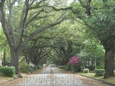 Albany, GA - Picture of Avenues
