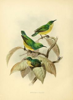 n665_w1150 by BioDivLibrary, via Flickr