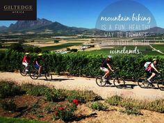 Cape Winelands   Mountain Biking