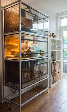 How Long do Tortoises Live? The Life of a Tortoise Reptile House, Reptile Habitat, Reptile Room, Reptile Cage, Reptile Enclosure, Terrarium Reptile, Aquarium Terrarium, Terrarium Ideas, Bearded Dragon Terrarium