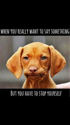 41b74e722703b8a5e07a64849772515c funny stuff ra sucks!!! ❣julianne mcpeters❣ no pin limits rheumatoid,Chronic Illness Cat Meme