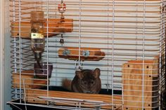 DIY Tutorial: How To Make Wooden Ledges For Chinchillas And Other Small Pets