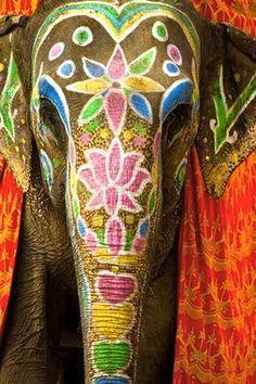 <3 ELEPHANTS <3