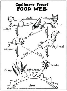 food web. This is a perfect diagram for the food web