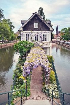 amazing arched pathway entry covered in wisteria!  audreylovesparis:  Strasbourg, France