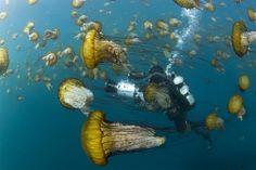 Amazing Underwater Photography Pictures