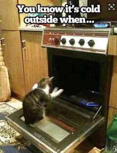=^..^= www.kittyprettygifts.com #cats #cute #lolcats #memes funny #humor #kittens #kitty #kittyprettygifts