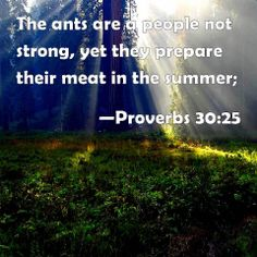 Proverbs 30:25 The ants are a people not strong, yet they prepare their meat in the summer;