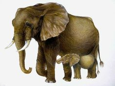Elephant, Drawings, Animals, Animales, Animaux, Elephants, Sketches, Animal, Drawing