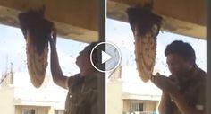 Homem Destrói Colmeia De Abelhas Com as Próprias Mãos Sem Qualquer Proteção http://www.desconcertante.com/homem-colmeia-abelhas-proprias-maos-qualquer-protecao/