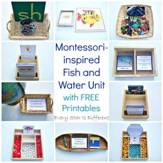 Montessori-inspired fish and water learning activities and free printables for kids. Montessori Practical Life, Montessori Preschool, Preschool Classroom, Ocean Activities, Learning Activities, Preschool Activities, Ocean Lesson Plans, Ocean Unit, Kindergarten