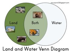 In Our Pond: Land and Water Venn Diagram