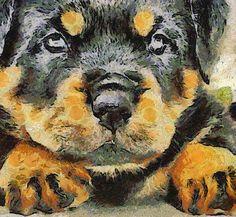 Rottweiler Puppy Portrait Canvas Print / Canvas Art by Taiche Acrylic Art German Rottweiler, Rottweiler Funny, Rottweiler Breed, Beautiful Dog Breeds, Beautiful Dogs, Puppy Stages, Acrylic Art, Pet Portraits, Pet Birds
