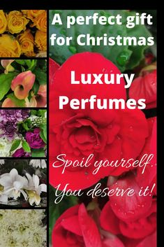 Tom Ford Luxury Perfumes are perfect gifts for Christmas! Give her/him a gift of love. Smell & Feel like a Celebrity! Spoil Yourself, Best Perfume, Tom Ford, Christmas Gifts, Fragrance, Celebrity, Luxury, Xmas Gifts, Christmas Presents