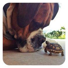 *่aww such a cute picture from @insta_animal, follow them for more adorable animal pictures @insta_animal  #Padgram