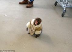 Holiday shopping: The monkey roamed around the store before being collected by animal services