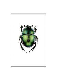 Weimar Circles No2 Poster - Halvcirklar - desenio.se Ladybird Drawing, Vintage Prints, Vintage Posters, Forest Poster, Poster 40x50, Beetle Tattoo, Green Beetle, Buy Posters Online, Prints Online