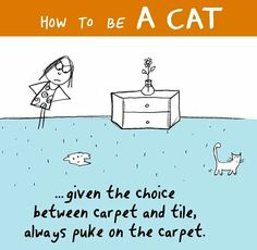 (^.^)~ .... Hairballz! (How to be a Cat)